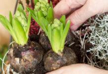Ogrodnictwo - co warto wiedzieć